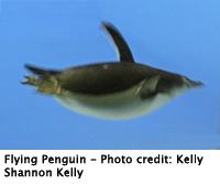 penguin_flying_200