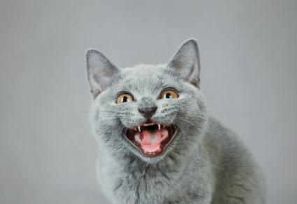 Cat Facts prank now an app