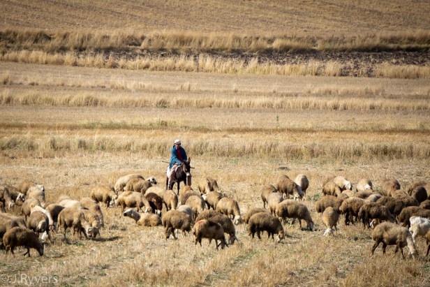 Kurban Bayramı Eid al Adha Sacrifice goat