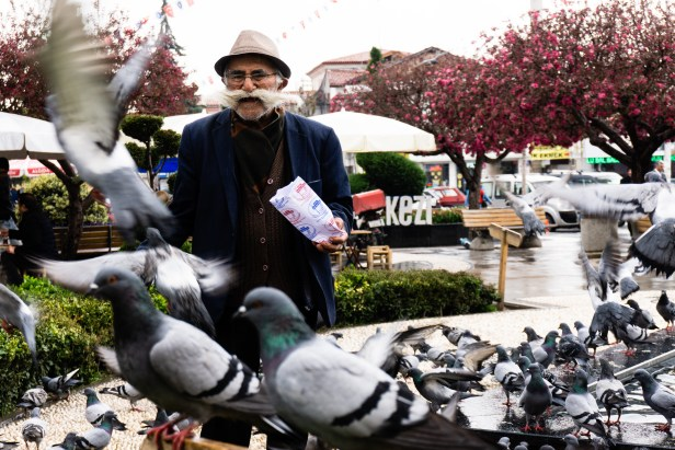 Çorum Merkez City Pigeons