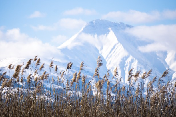 Eber Lake Reeds Blog