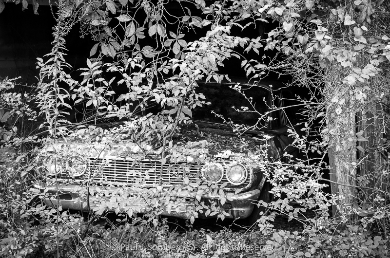 64 Chevy peeking out from behind the brush.