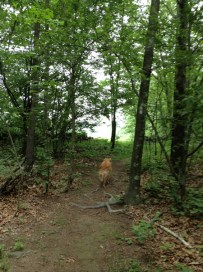 Lone Wolf Trail