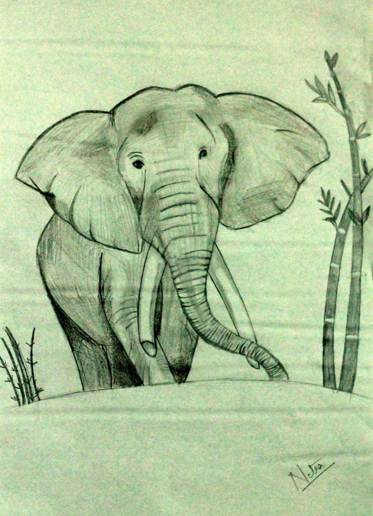 Elephant by Netra M