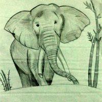 Elephant by Netra M.