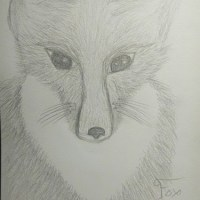Fox by Carrie Canup