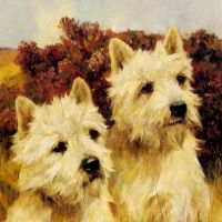 Jacque and Jean, Champion Westhighland White Terriers by Arthur Wardle