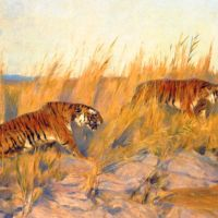 Tigers by Arthur Wardle