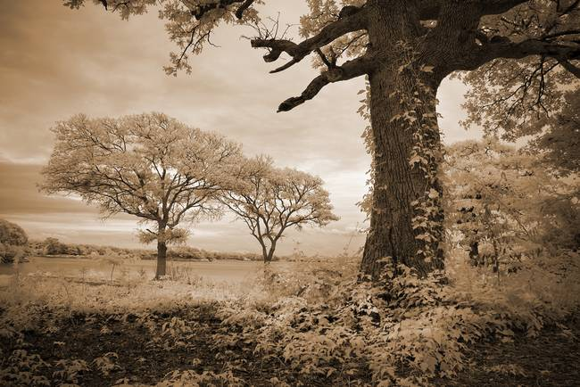 Stories-of-Old--Infrared-Trees-Landscape_art