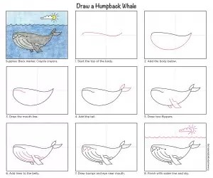 Humpback Diagram