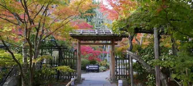 円通院の紅葉写真同じく本堂脇の門を角度を変えて撮った写真画像