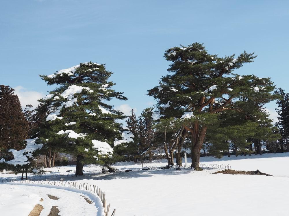 毛越寺の冬の風景写真