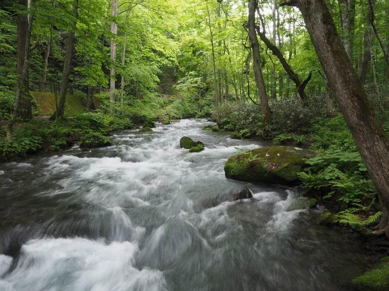奥入瀬渓流の5月末の風景写真