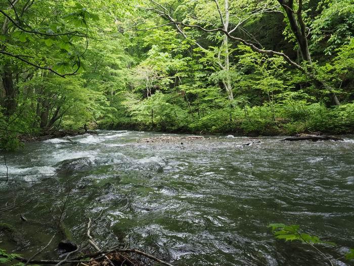 奥入瀬渓流の夏の風景写真