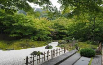 円通院の梅雨の苔の風景写真