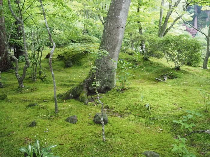 松島園通院の庭園の風景