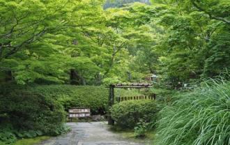 円通院の苔の庭の風景写真