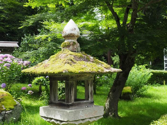 中尊寺の苔の灯篭の写真