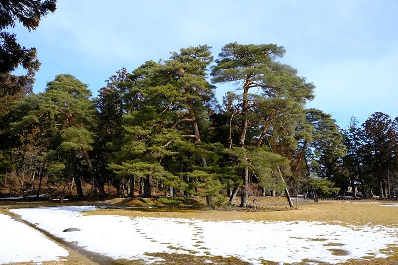 世界遺産平泉毛越寺の風景写真