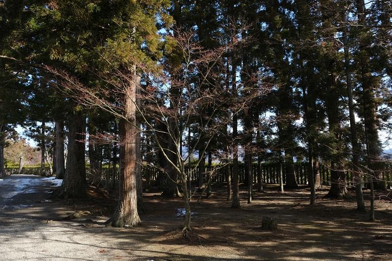 奥州平泉毛越寺の風景写真