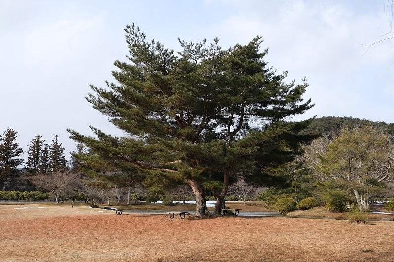 平泉の風景写真