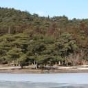xt3で撮影した毛越寺と大泉ヶ池の冬の風景写真