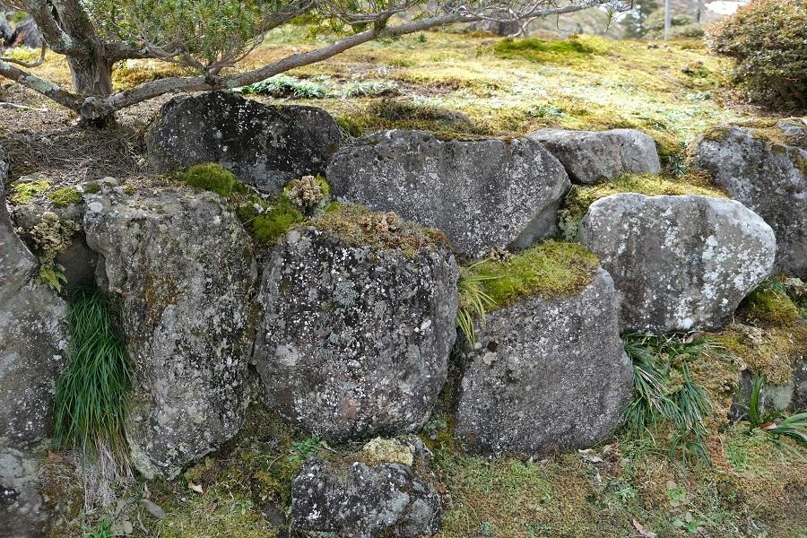 x-t3レビュー画質の評価庭のイワヒバ3月の風景写真7