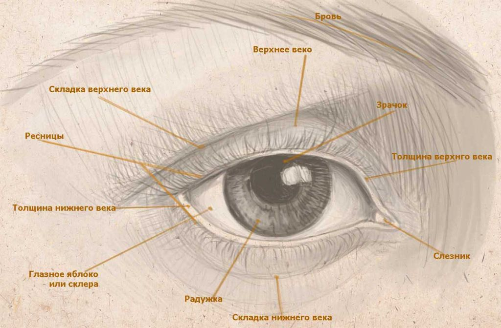 The structure of the eye of man