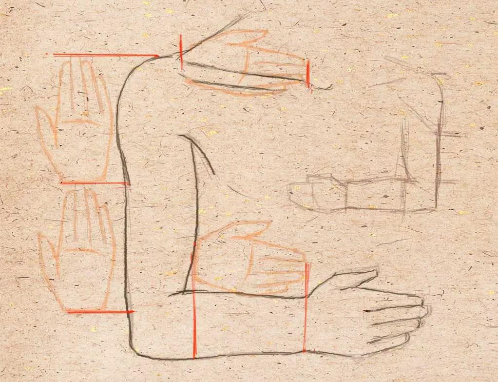 Алақандағы адамның қолының пропорциялары