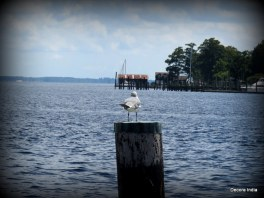 Hello Seagull