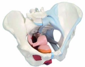 Болит лобковая кость при ходьбе