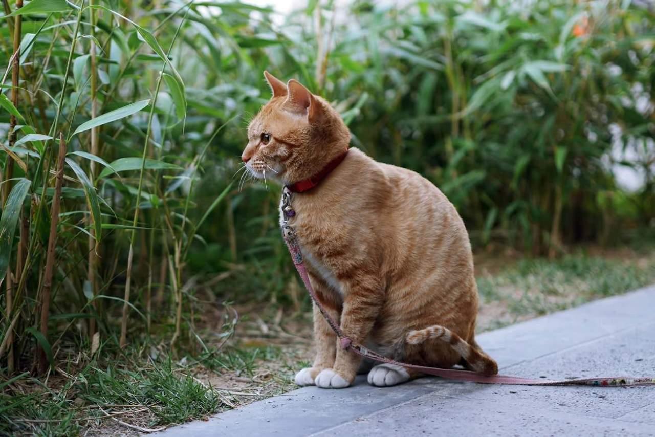 どうしても直らない猫背を改善するために必要な3つの基本的なこと