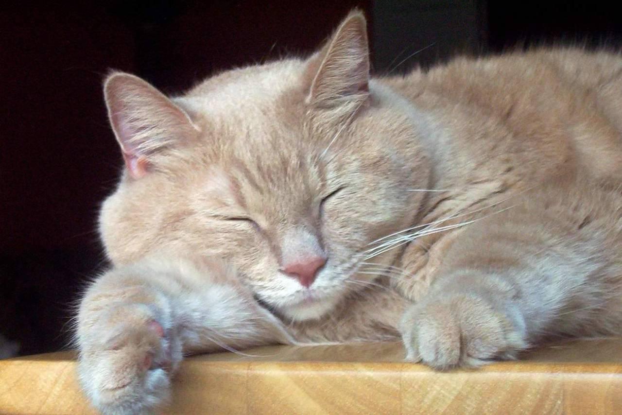 めちゃくちゃ眠い!そんな時に眠気を覚ますための簡単な5つの方法