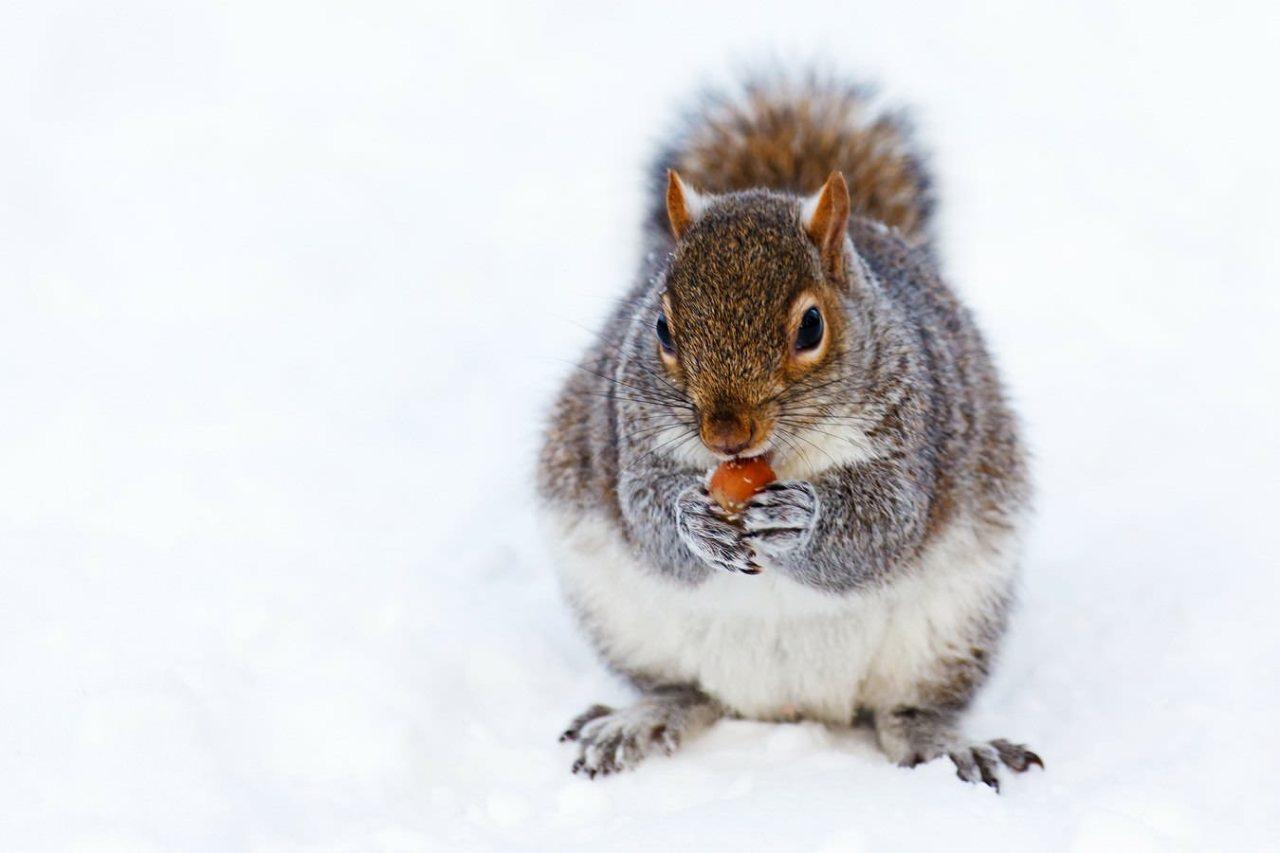 「寒い時に」の画像検索結果