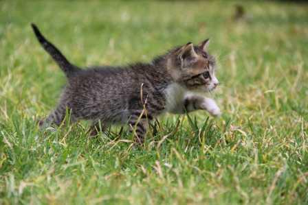 愛くるしい姿でめっちゃ癒される!猫が可愛いと思える5つの理由