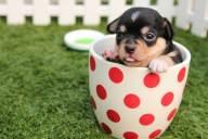 室内で!ペットの臭いを防止・消臭するための効果的な対策方法4選