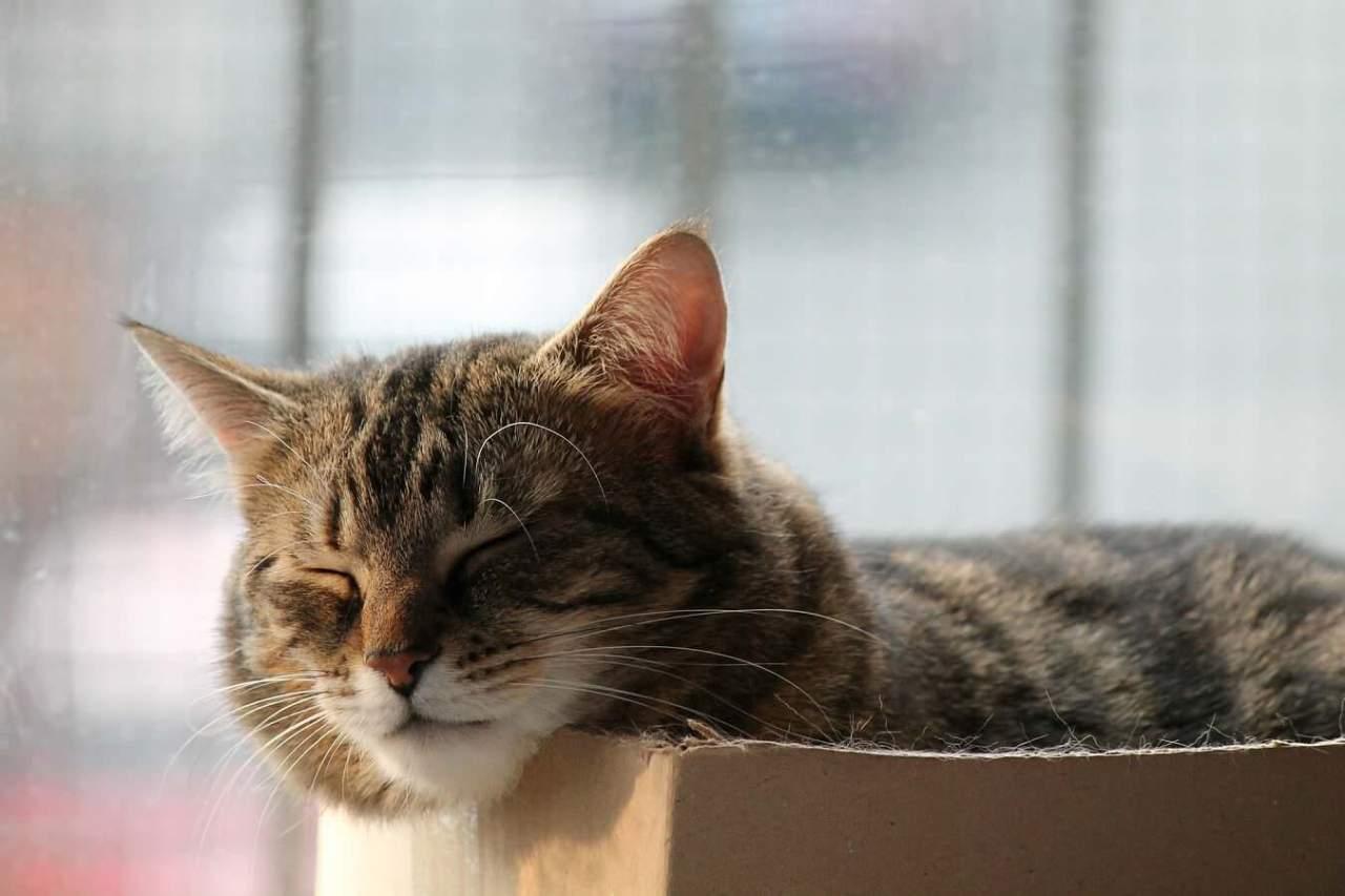 うるさいし健康にも悪い!寝ている間のいびきの危険性や悪影響3選