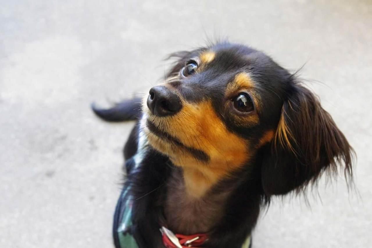 効果的に覚えさせる!犬の「待て」のしつけの仕方や練習方法のコツ・手順5選