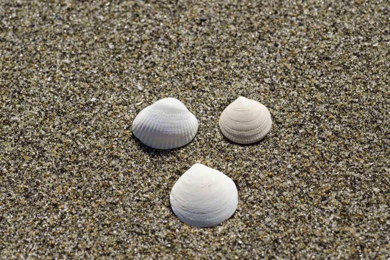 砂抜きが重要!潮干狩りの貝の持ち帰り方や保存方法の手順・コツ3選