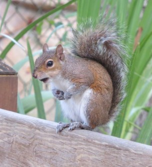 19 squirrel