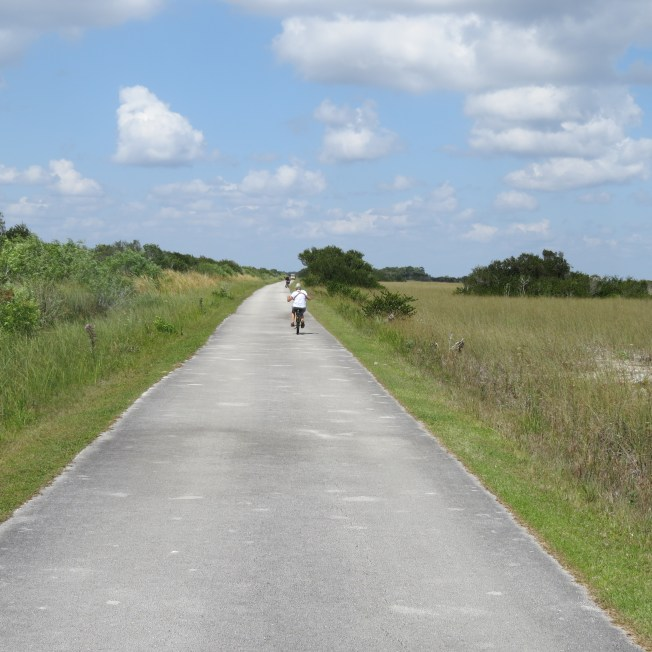 36-roadback