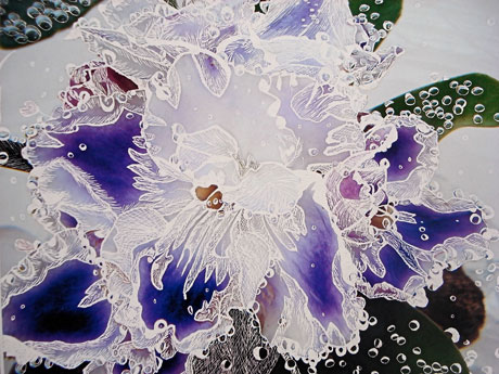 Violet in Sparkling Water by Lisa Garness Mallory
