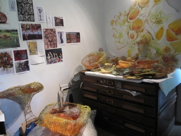 Fiona Campbell's progress on Abundance Garden