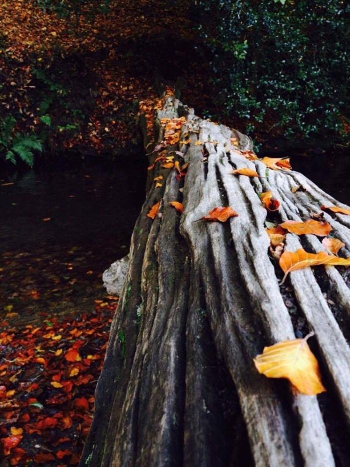 Autumnal Changes open art exhibition