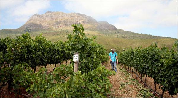 De Treffen Winery in the Stellenbosch region on South Africa