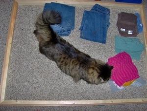 Even Pets Like Laundry