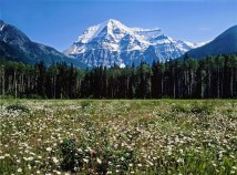 Blooming Meadow & White Summit