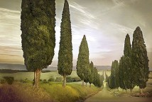 Cypress Road, Siena