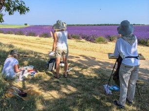 An ocean of lavender