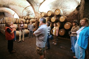 Winery tour cellar